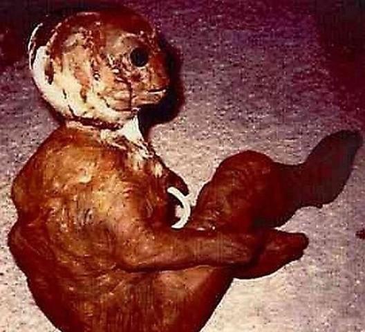 """MESSAGGI DALLO SPAZIO - """"Cucciolo"""" di Alieno in Messico?"""