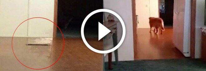 """Strana presenza nel video del nuovo cane: """"È il fantasma della mia cagnolina morta"""""""